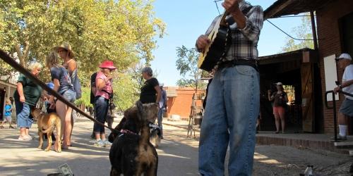 Sierra-Tuolumne Kennel Club   Dog Obedience & Agility Classes